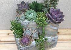 Amazing diy indoor succulent garden ideas (24