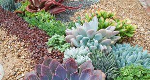Florile de piatră pot forma aranjamente pline de personalitate.