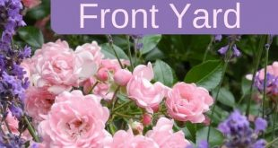 How To Create An AMAZING Front Yard Rose Garden