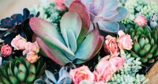 How to Create a Succulent Garden