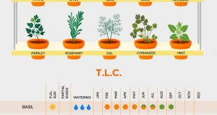Sage advice in herb care: plan your grown-at-home salads in advance with this ha...