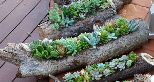 Succulent gardens in hollowed out logs and also in timber rounds available from ...