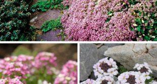 Top 10 Best Plants for a Rock Garden