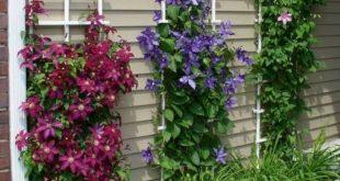 15+ Beautiful Minimalist Vertical Garden For Your Home Backyard