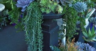 3. #Draping Greenery - 43 #Outstanding Succulent #Gardens You Can Create at Home...