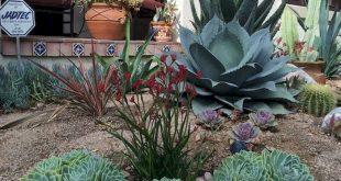 40 Cute Succulent Backyard Landscapes You Must Have
