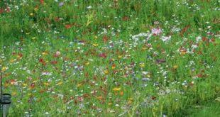 Es wird bunt: So legen Sie eine Blumenwiese an