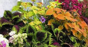Plants for North Facing (Shady) Balcony Garden