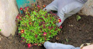 Soil For Rock Gardens: Information On Mixing Soil For Rock Gardening