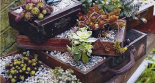 Teeny Tiny Gardening + Interview