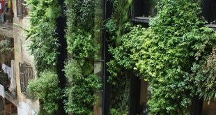 Vertical Garden in the patio of a private house, Beirut