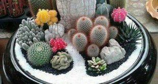 27+ Beauty Cactus und Sukkulente Gartenideen für den Innenbereich