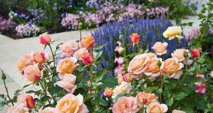 44 beautiful rose flower ideas #gardenideas # ideas #rose flowers #wonderful