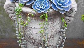 60+ Charming Succulent Indoor Garden Ideas 2019 - Page 60 of 64