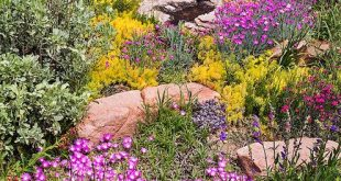 Charles Mann made a small but colorful rock garden in Santa Fe, New Mexico, whi...