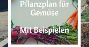 Erstelle deinen Pflanzplan für Gemüse – Mit Beispielen