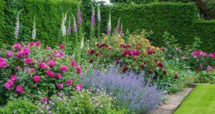 Gartendesign mit Rosen – Tipps für einen schönen Rosengarten