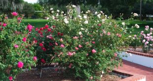 Prepare New Rose Beds – Learn More About Starting Your Own Rose Garden
