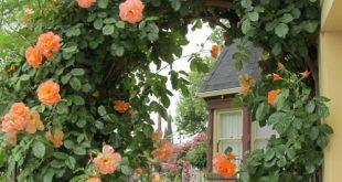 Rosenbogen bepflanzen und prachvollen Hingucker im Garten gestalten