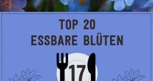 Unsere Top 20 essbaren Blüten