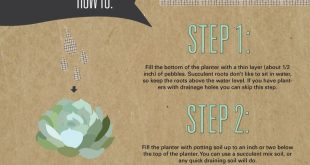 how to plant a succulent garden, the infographic