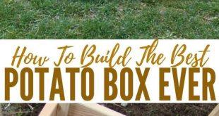 25 + › So bauen Sie die beste Kartoffelschachtel aller Zeiten – Die Schachtel soll extra sein