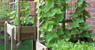 32 DIY Garden Box for a Small Yard Tutorial