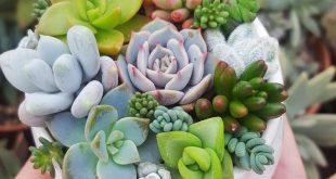 50 Succulent Garden Ideas (Succulent Varieties, How to Grow & Take Care