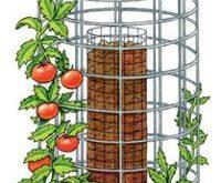 Anleitung und Tipps Tomaten selbst anzubauen ist nicht schw...