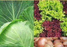 Aussaatpläne im August - Baue Gemüse morgen an