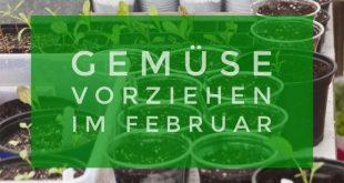 Besondere Gemüsesorten selbst aussäen - Pflanzen vorziehen im Februar