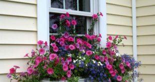 Blumenkasten an der Fensterbank schmückt die Hausfassade - Fresh Ideen für das Interieur, Dekoration und Landschaft