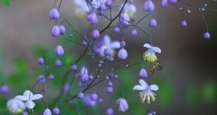 Ein Schattenbeet gestalten - Wildes Gartenherz zeigt wie einfach das ist