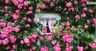 Front Yard Rose Garden