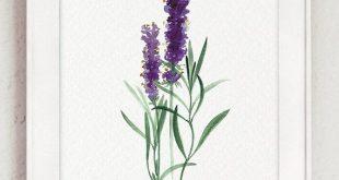 Kitchen Herbs Botanical Natural Gift Set of 12 Giclee Fine Art Print, Organic Herb Garden Kit, Lavender Flower Buds, Chamomile Flower Poster