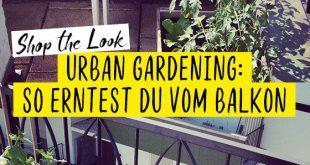 Urban Gardening – alles für die Ernte vom Balkon