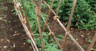 10 Fun Vertical Gardening Ideas