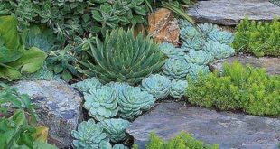 18 Amazing Succulent Garden Ideas For Front Yard Design - HOME IDEAS