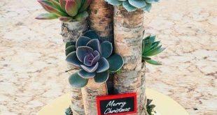 24 beauty cactus and succulent garden ideas for indoor 11