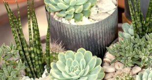 40 Cute Adorable Succulent Arrangement For Garden This Season