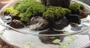 40 Ideen für einen brillanten Indoor-Wassergarten