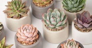 60+ DIY Indoor Sukkulenten Arrangements Ideen 2019 - #Gärtnern