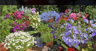 8 Apartment Balkon Garten Deko-Ideen, die Sie sich ansehen müssen - Trenton Clem