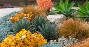 Awash with color and shapes, this warm and eye-catching succulent garden is a re...