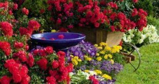 Blooming red roses garden design ideas garden decoration