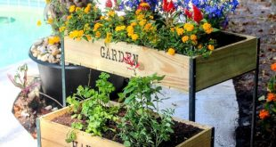 DIY Raised Garden Boxes with Organic Soil