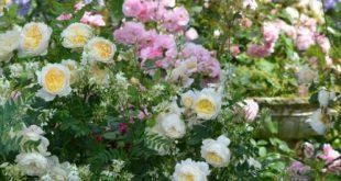 Die Schönheit des gemütlichen Pflanzens. Entmutigt auch Unkraut.