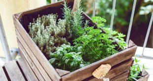 Do it yourself - Kräutergarten für den Balkon aus Weinkisten / Obstkisten einfach selbst gemacht! - Dorie