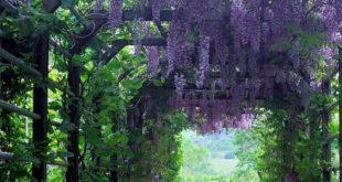 Erstaunliche vertikale Gartenideen