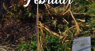 Es ist Februar: Was gibt es im Garten zu tun?